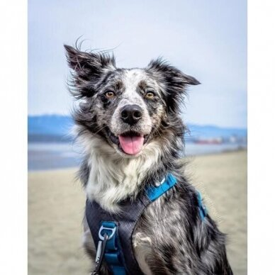 Kurgo JOURNEY AIR DOG HARNESS petnešos šunims 10