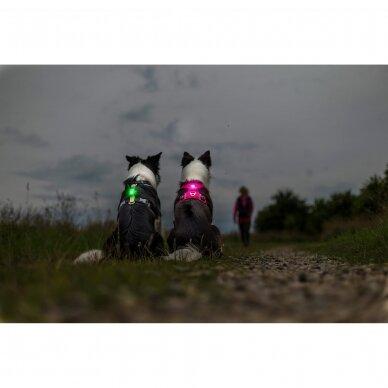 Orbiloc Dog Dual saugos lemputė šunims 12