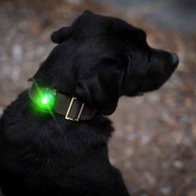 Orbiloc Dog Dual saugos lemputė šunims 13