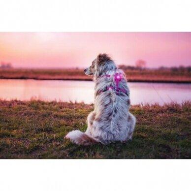 Orbiloc Dog Dual saugos lemputė šunims 14