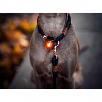 Orbiloc Dog Dual saugos lemputė šunims 15