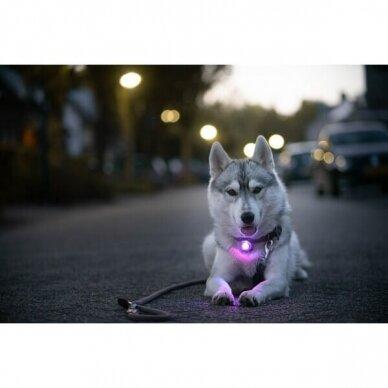 Orbiloc Dog Dual saugos lemputė šunims 16