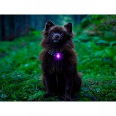 Orbiloc Dog Dual saugos lemputė šunims 17