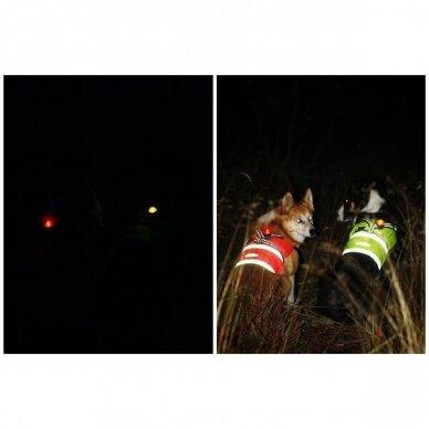 Orbiloc Dog Dual saugos lemputė šunims 18