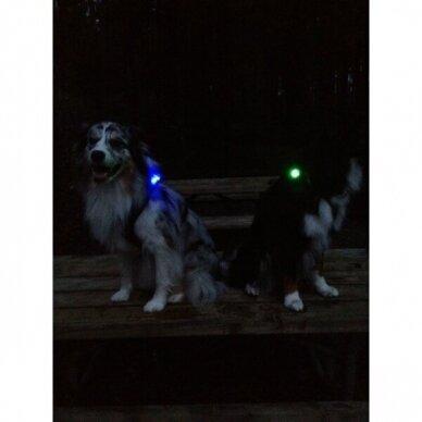 Orbiloc Dog Dual saugos lemputė šunims 19