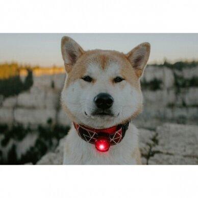 Orbiloc Dog Dual saugos lemputė šunims 23