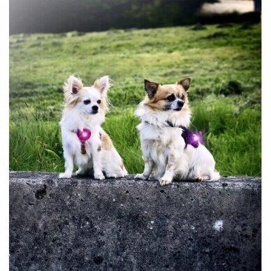 Orbiloc Dog Dual saugos lemputė šunims 24