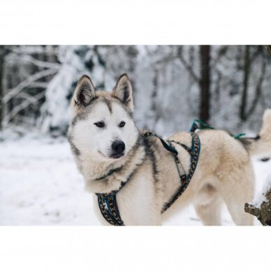 ManMat  SIBERIAN RACE harness pakinktai šunims 10