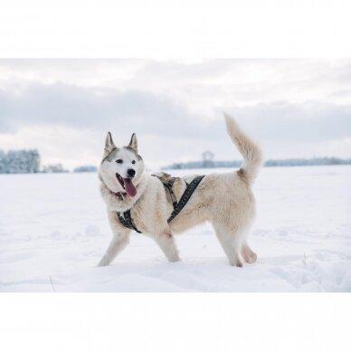 ManMat  SIBERIAN RACE harness pakinktai šunims 11