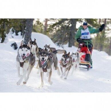 ManMat  SIBERIAN RACE harness pakinktai šunims 7