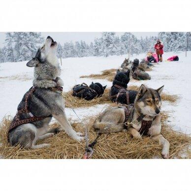 ManMat  SIBERIAN RACE harness pakinktai šunims 8