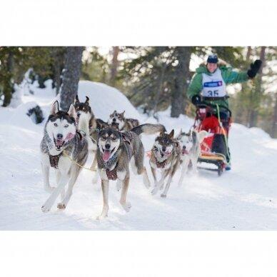 ManMat  SIBERIAN RACE harness pakinktai šunims 9
